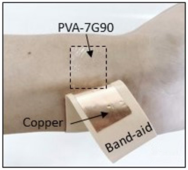 A close-up of Purdue University's wearable triboelectric generator technology. It is applied to the user's skin.