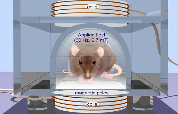 An illustration that depicts a mouse being used to test repetitive transcranial magnetic stimulation.